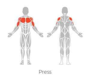 Muscle Targeting the Chest with the Teeter FreeStep